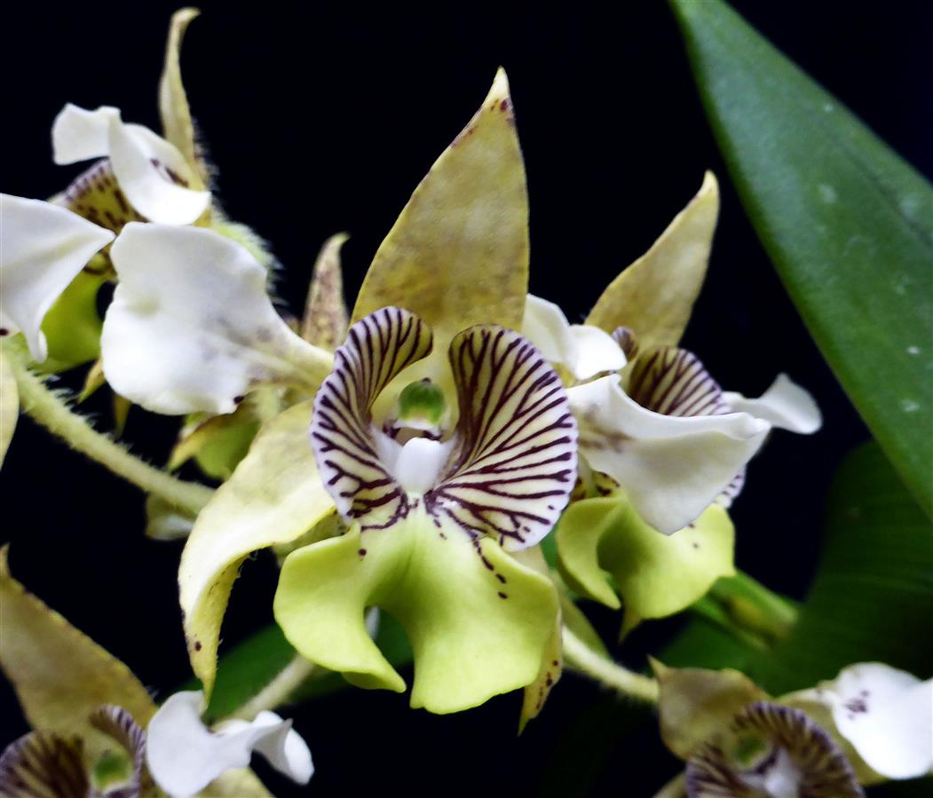 b565f1208ea Latest Orchid Awards - The American Orchid Society